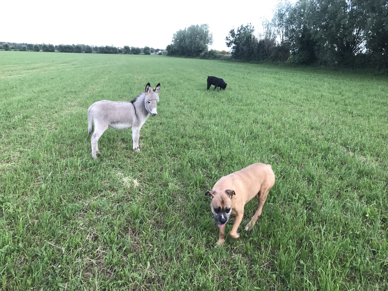 Honorine & les chiens