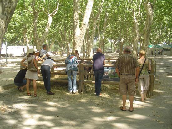 beaucaire-le-stand-1-1.jpg