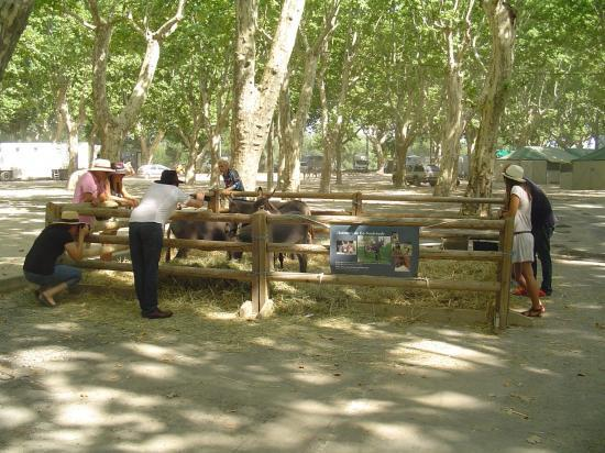 beaucaire-le-stand-2.jpg